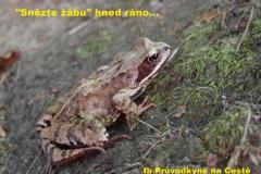 sněz žábu ráno